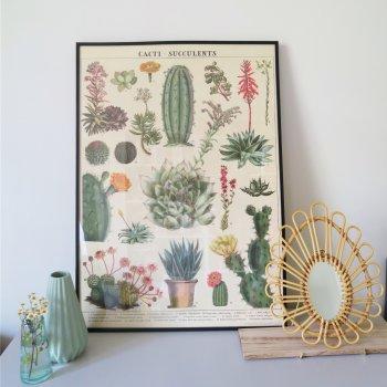 affiche, cactus et succulentes, cavallini, poster, affiche vintage, créateur, maison, décoration, home sweet home, planche botanique