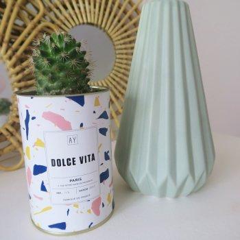 cactus, succulentes, odette et lulu, ay cactus, créateurs, concept store, eshop, décoration, home, home sweet home, intérieur